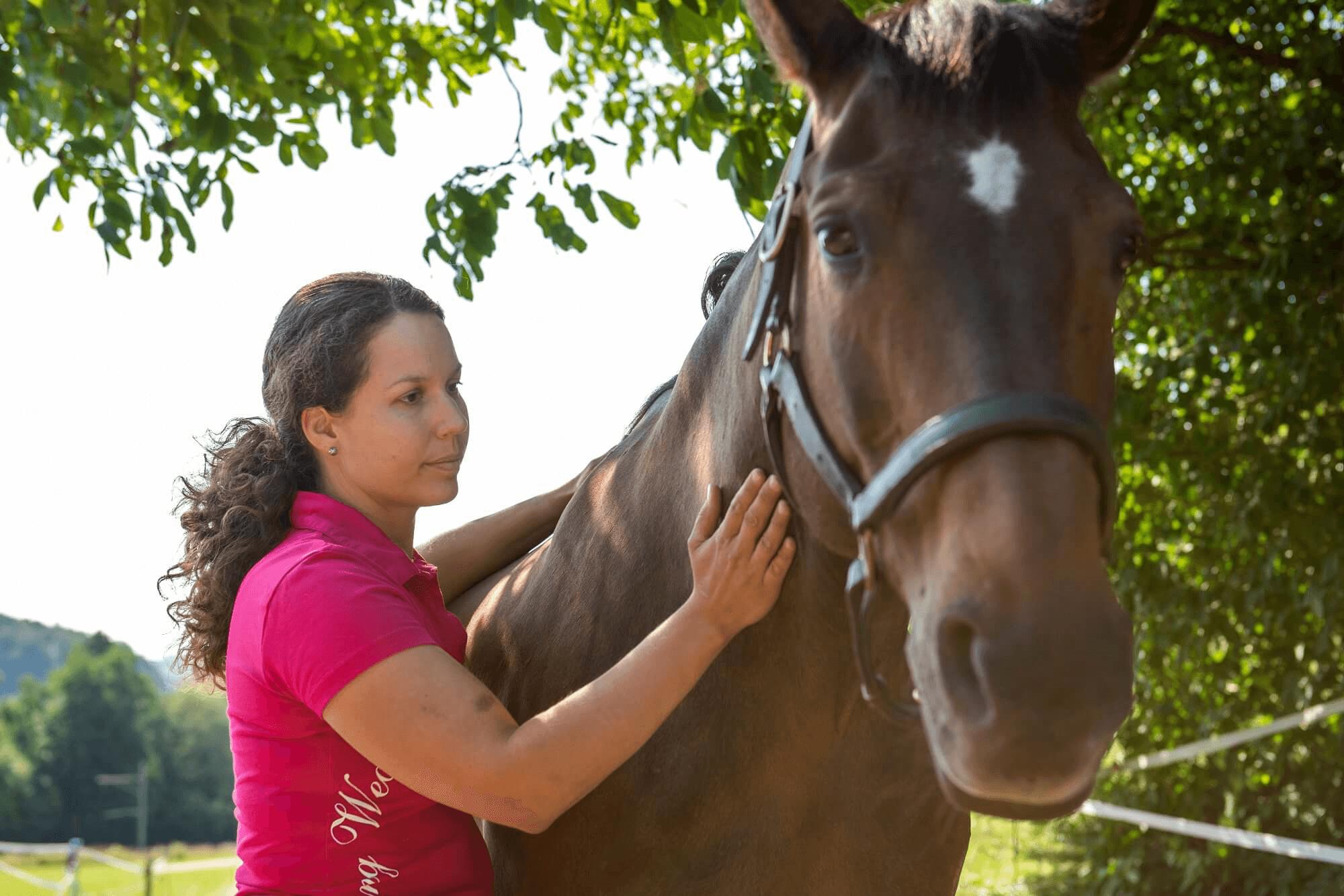 Faszien, Pferdephysiotherapie