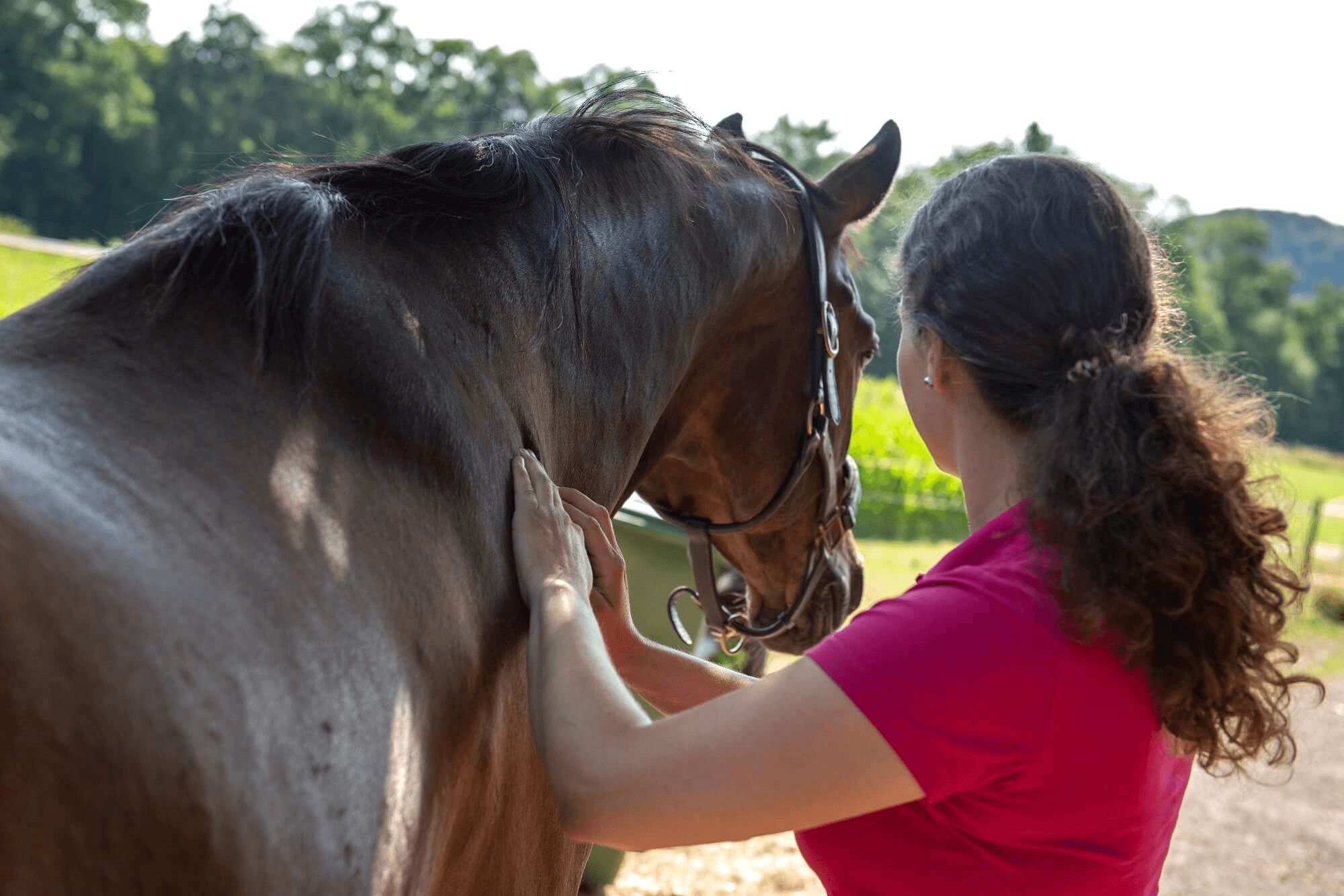 Muskeltherapie, manuelle Techniken, Pferdephysiotherapie