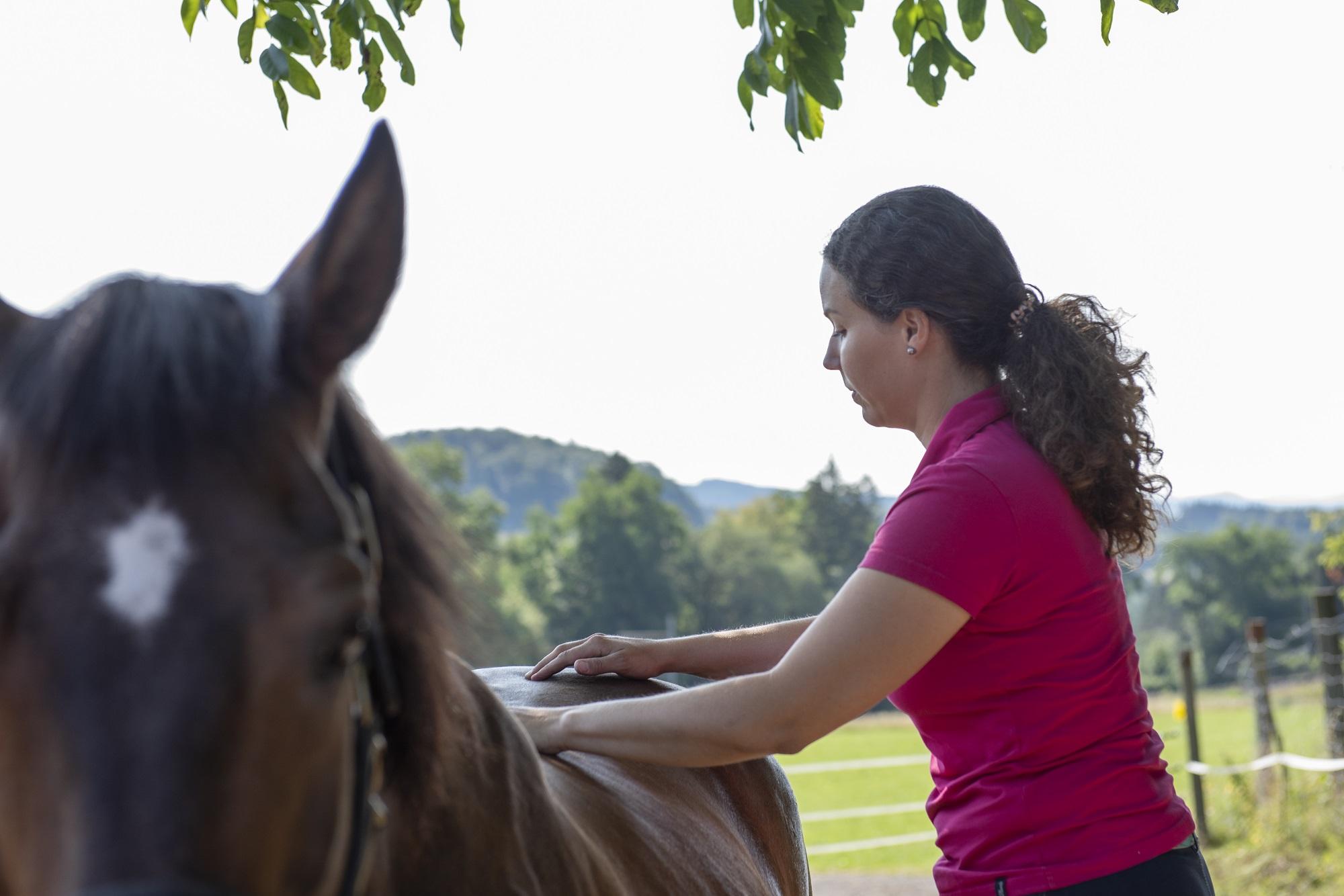Akupressur am Pferd